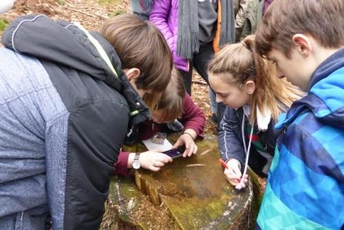 Mit Hilfe einer Lupe untersuchen die Schülerinnen und Schüler mit Susanne Haferbeck, wie sich die Jahresringe für diesen Baum entwickelt haben und welche Schlussfolgerungen sie daraus für das Leben des (gefällten) Baumes ziehen können.