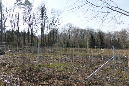 Eine der drei Versuchsanbauflächen. Sie sind eingezäunt als Schutz gegen Wildverbiss.